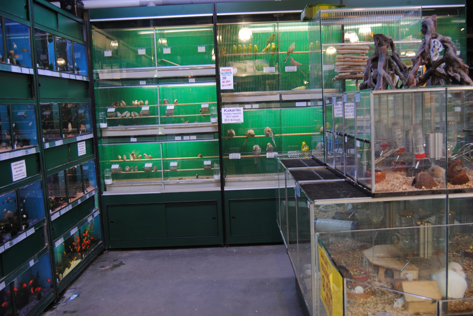 L 39 animalerie la jardinerie delbard ath floragri for Animalerie en ligne poisson